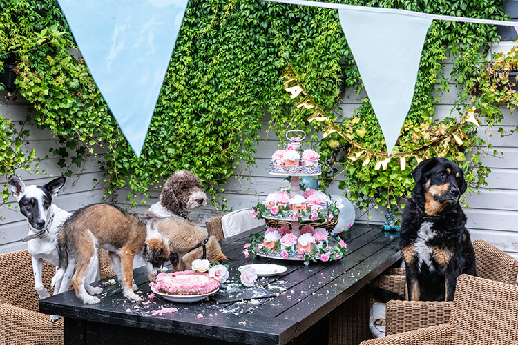 Honden High Tea - Financieele Dagblad